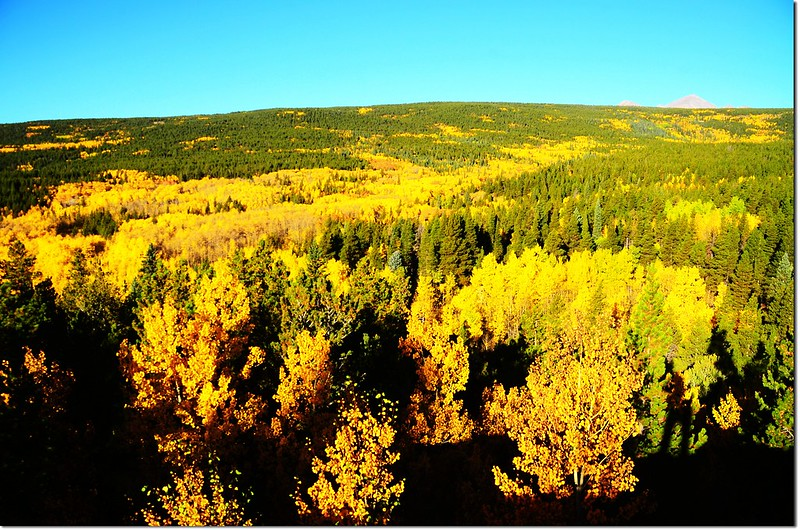 Fall colors by Peak to Peak HWY, Colorado  (3)