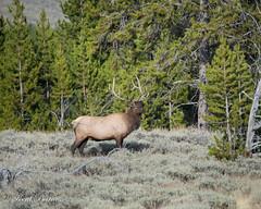 Yellowstone Teton Sept 2015