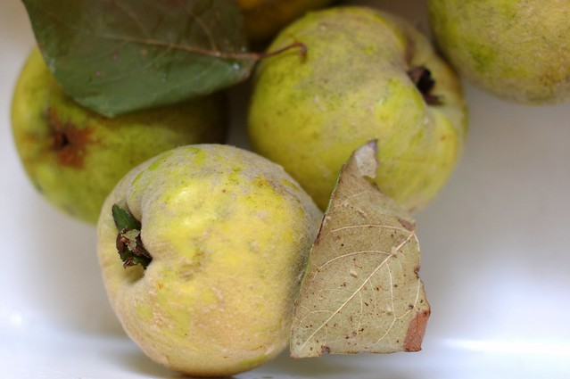 Hudson Valley quinces by Eve Fox, the Garden of Eating, copyright 2015