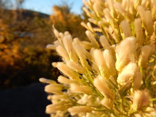 Patagonia Lake State Park - 1