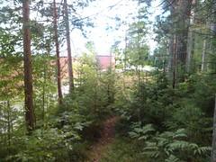 Juletrestien - Prestegårdsskogen