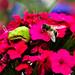 The Bee is so Big for Me...-2971 by mdzevitskaya