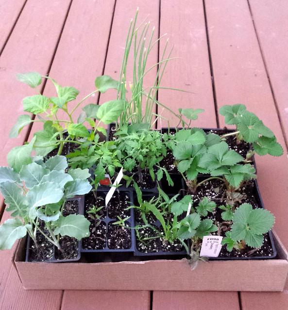 a box full of new plants