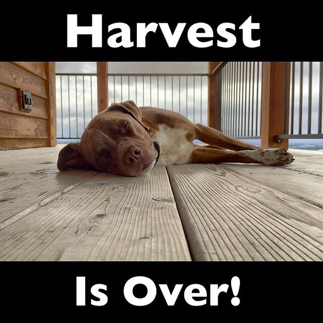 #harvest2015 #dogsofwine #winedogs #traveloregon