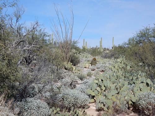 Saguaro NP - 1
