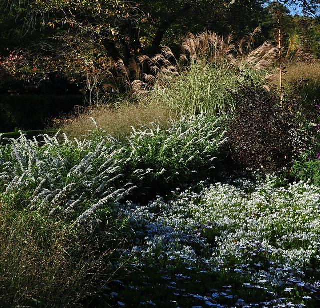 Flower Garden Walk (24)