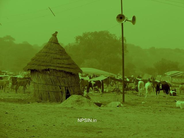 Animal Fair: Horse Fair: Announcement, Bujji / Koop /Hut and Horse Fair