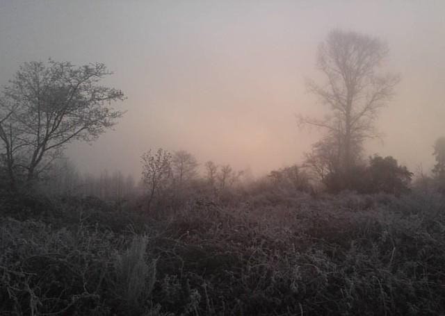 19 degrees with freezing fog