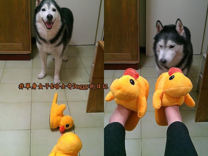 doggy黃色小鴨鞋07