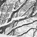 Snow everywhere by যাযাবর / Gypsy