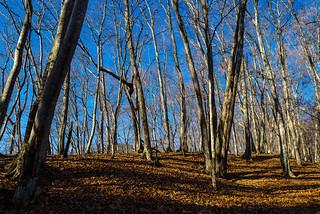 浅間尾根の樹林・・・また歩くことでしょう