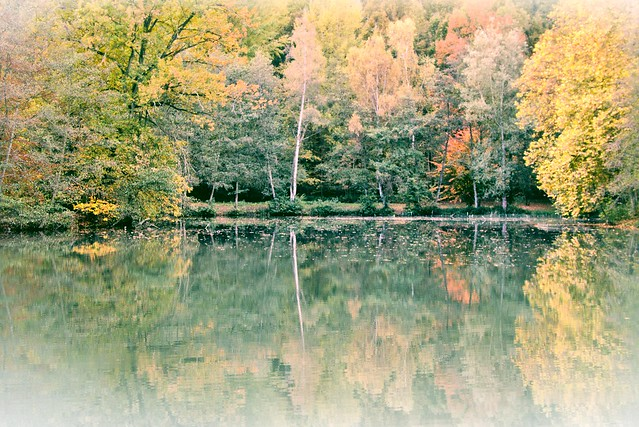 Delicate autumn pond