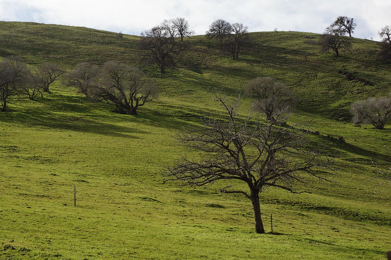 2017-01-19 Contra Loma Regional Park - Take 3 [#4]