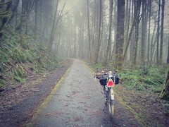 The Banks-Vernonia Trail was all moody this morning. #banksvernoniatrail