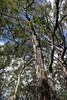 Kincumba Mountain Reserve by cathm2