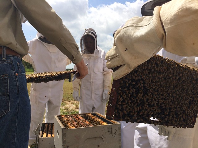 Intro to Beekeeping August 22, 2015