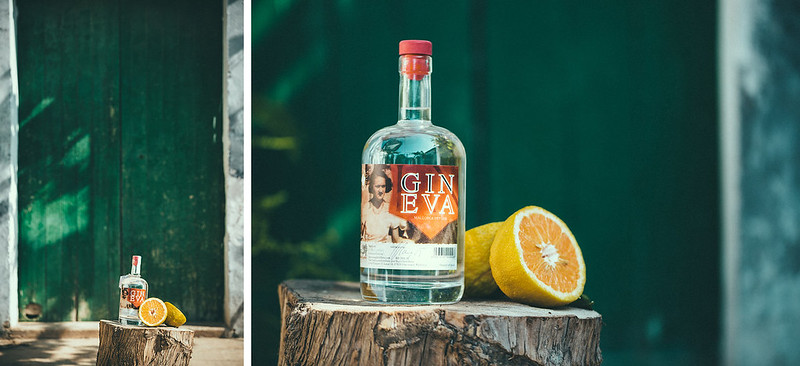 gin-eva-recogida-naranjas-baja-23