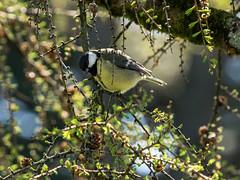 avril  2015 Jardin botanique,oiseaux