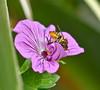 A Flower's Friend. by Omygodtom