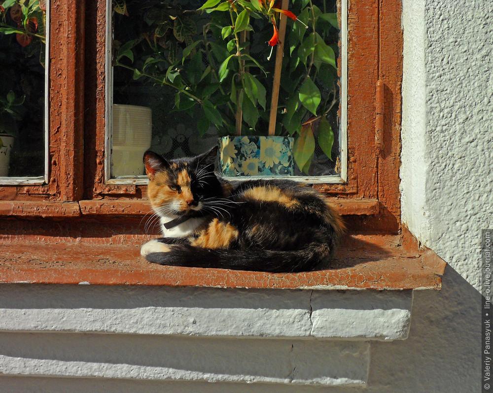 20151002_lutsk_cat_001