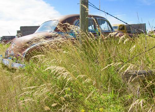 canada cars junk rust rusty junkyard crusty