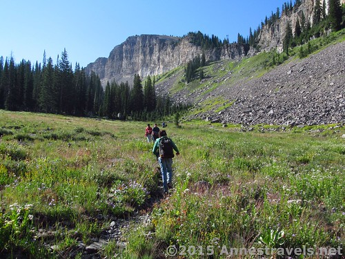 One of the many social trails into Upper Darby Canyon, Jedidiah Smith Wilderness, Wyoming