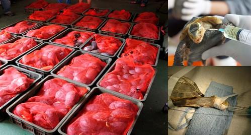 食蛇龜組圖(4)
