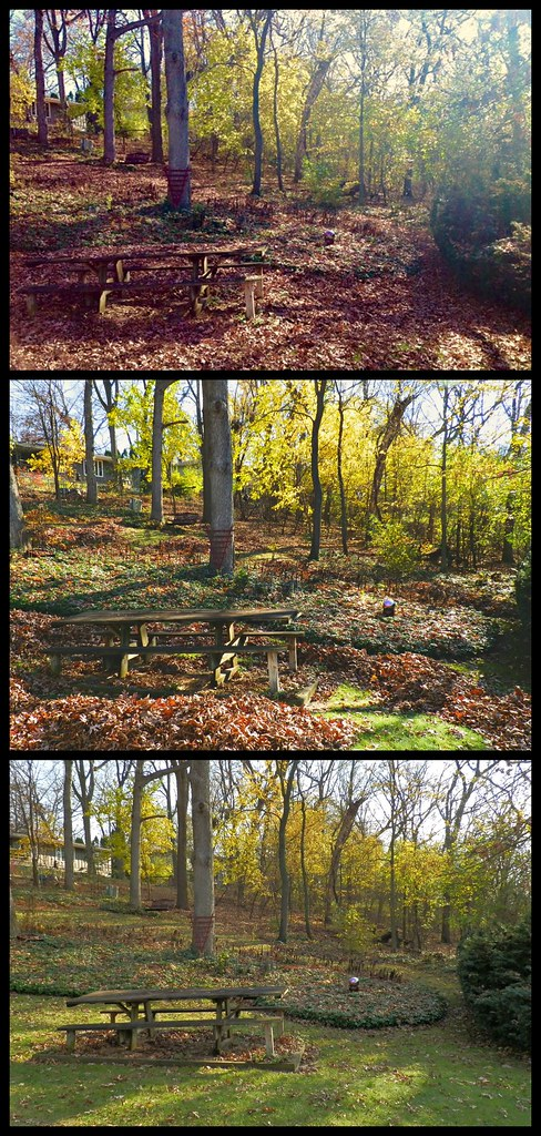 leaf piles collage