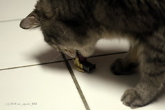 Day 333 of 365: Cat Fan of LEGO (CFOL)