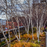 The High Line - Manhattan New York City NY