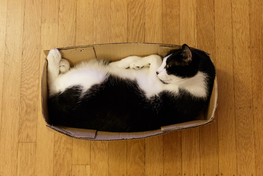 Our cat Boo completely fills a narrow box as he sleeps