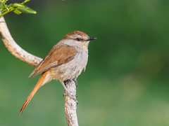 Kunene river lodge, birds