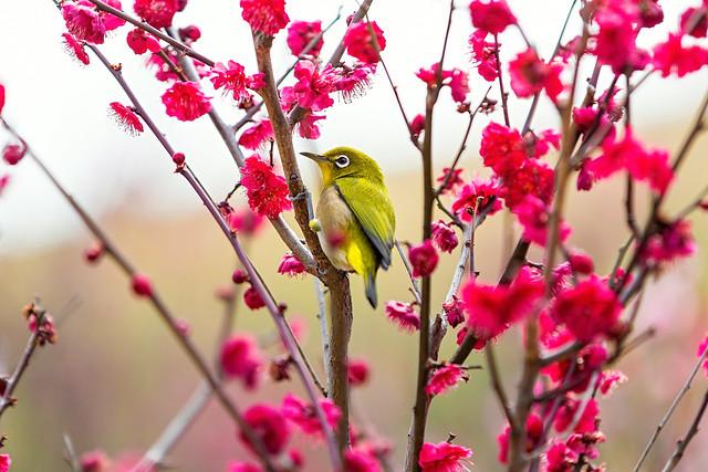 In Full Blossom