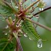 Regenwetter by Ernst_P.
