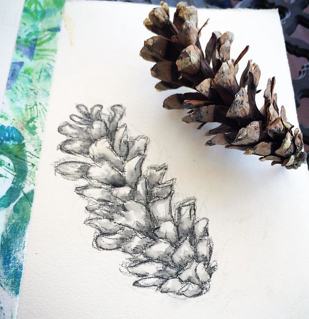 from my sketchbook: pinecone