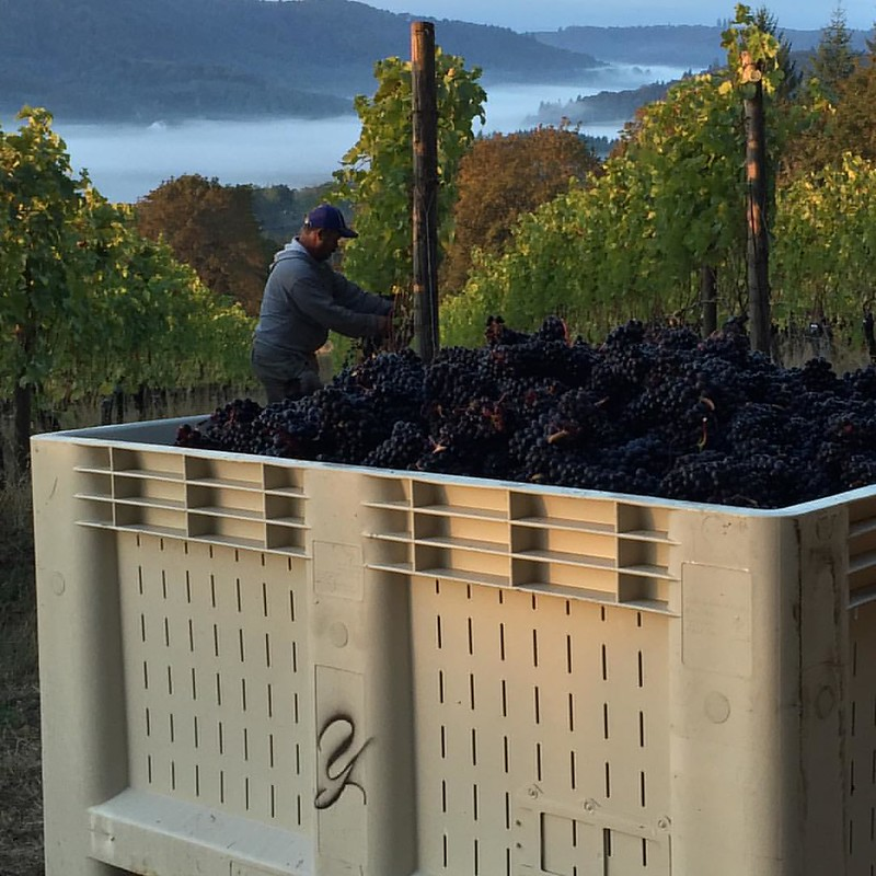 As our 2015 harvest comes to an end we are grateful for all your support. #harvest2015 #willamette