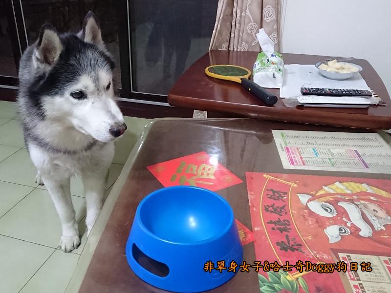 Doggy颱風13