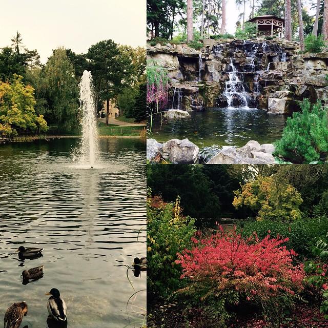 Türkenschanzpark Herbst Impressionen
