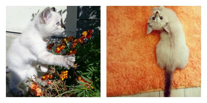 PicMonkey Collage8(1)