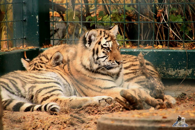Tierpark Berlin 07.11.2015  028