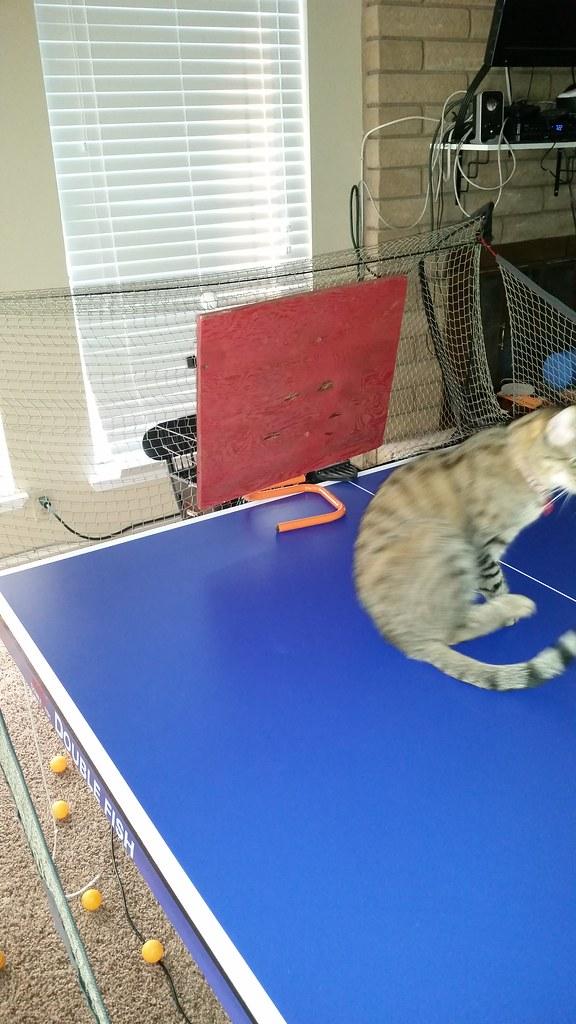 Return Board Alex Table Tennis Mytabletennis Net Forum