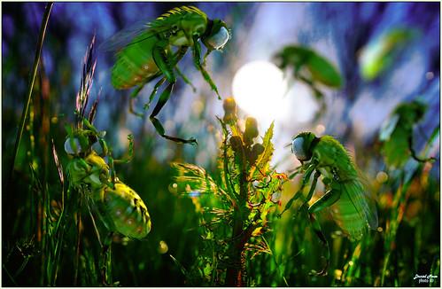 Flying greens