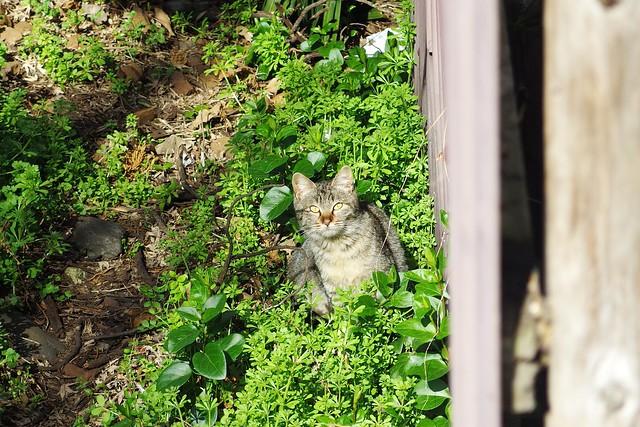 Today's Cat@2017-03-12