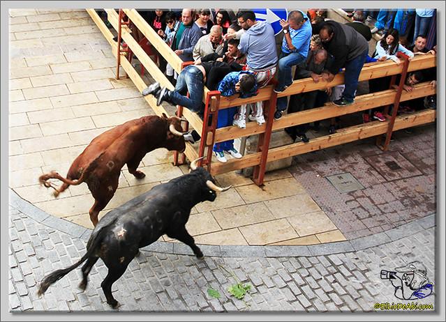1 Briviesca en Fiestas 2.015 Segundo encierro Sopas de ajo y encierro infantil