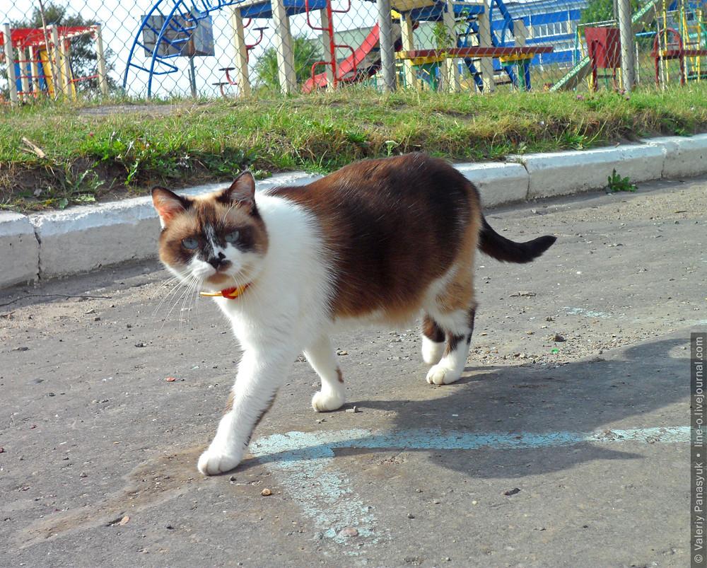 20150915_novik_cat_002