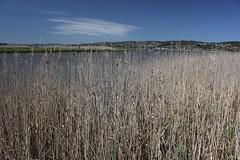 Tamar Island Wetlands
