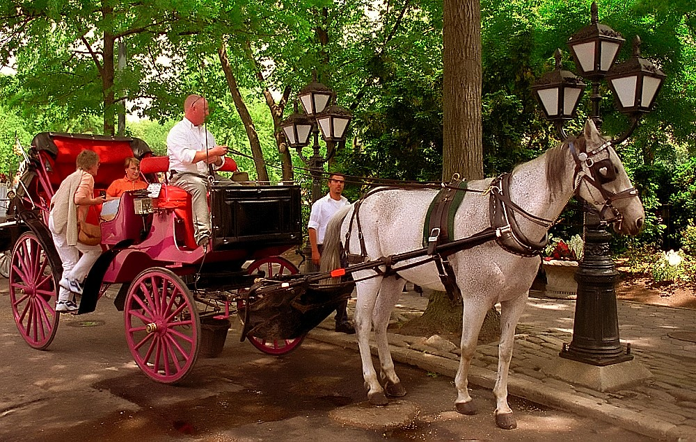 Central Park 'Horse & Buggy'. Credit - David Ohmer, flickr.