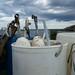 bucket of buoys