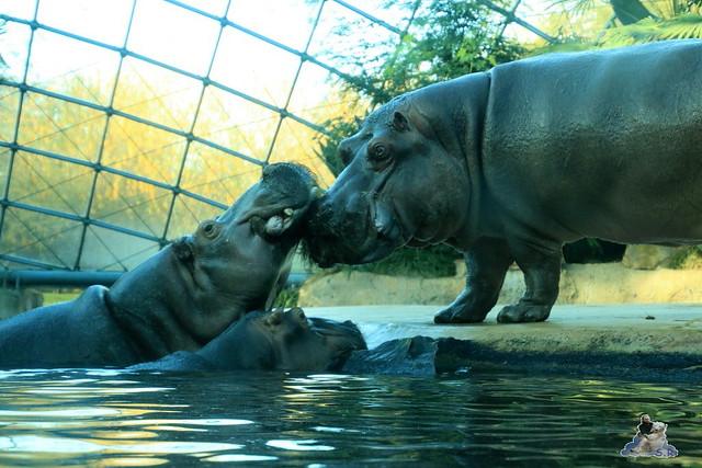 Zoo Berlin 08.11.2015  0143