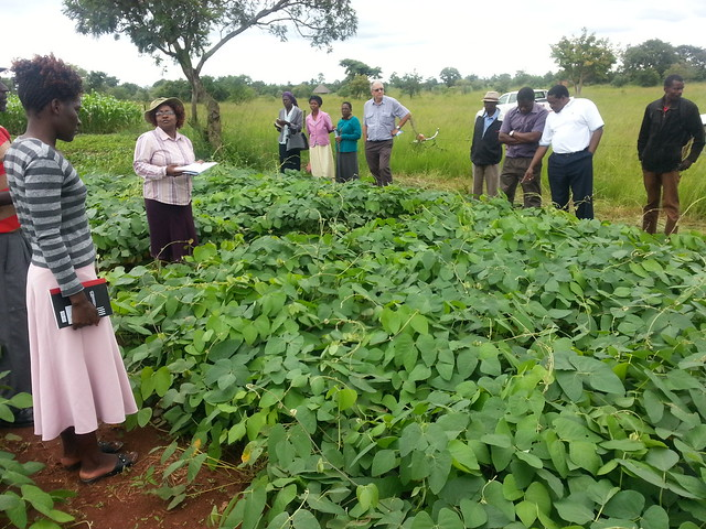 Zimbabwe Crop-Livestock Integration for Food Security (ZimCLIFS) project